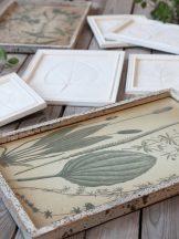 """Vintage """"Erdei Növények"""" Fali Kép"""