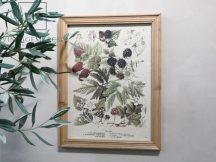 "Antik Natúr ""berries motif"" Kép - 43 cm."