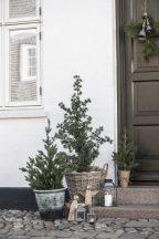 Vintage Fenyőfa Juta Tőcsomagolással - 70 cm.